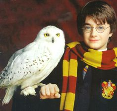 Harry & Hedwig, xxx The Sorcerers Stone