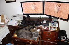 Pet Pictures: Two Cats at My Desk!!!