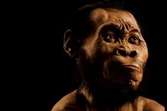 A photo from the October issue of National Geographic shows a reconstruction of Homo naledi's face. (Mark Thiessen/National Geographic via AP) National Geographic, Hominid Species, Human Family Tree, University Of The Witwatersrand, Especie Animal, Face Change, Homo, Early Humans, Human Evolution