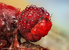 Dew Soaked Insect - fwah!