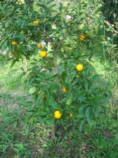 Potatura alberi da frutta calendario