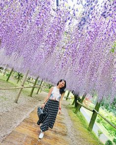 Oh! My heart can't stop smiling! ❤ Sorry can't help! I'm under a sea of beautiful wisteria flowers! ⚘ // Kawachi Fujien Wisteria Garden, Kitakyushu, Fukuoka Prefecture, Japan. instagram: @quennandher // FSHN BNKR KEEPSAKE THE LABEL cropped top // CMEO COLLECTIVE skirt // KEDS Triple white platform sneakers // CHANEL Perfect Edge Navy Flap bag