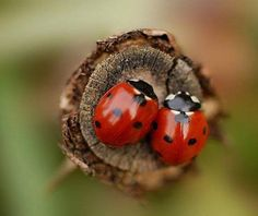 Every time I see a Lady Bug I know its my cousin Rofina, who was taken from us far too early, visiting me to say Hello Beautiful Bugs, Beautiful World, Lady Bug, Beautiful Creatures, Animals Beautiful, Animals And Pets, Cute Animals, Animals Photos, Animal Pictures