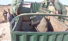 Rare Footage Shows What Happens To Wild Elephants Who End Up In Zoos | Care2 Causes