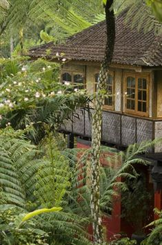Sarinbuana Eco Lodge: 2000 feet up the slopes of Mount Batukaru, surrounded by nature & local culture. Central Bali, Indonesia. Eco programs include a reef restoration project? Community programs too?