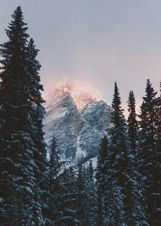 Shared by Thomas. Find images and videos about tree, winter and forest on We Hea. - Shared by Thomas. Find images and videos about tree, winter and forest on We Heart It – the app t - Landscape Photography, Nature Photography, Travel Photography, Photography Ideas, Beautiful World, Beautiful Places, Pretty Pictures, Beautiful Landscapes, The Great Outdoors