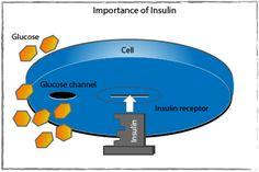 Insulin is the 'key'