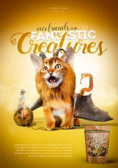 """Fantastic Creatures"" is a new STORM internal project inspired by our big love for pets, animals and beasts. These very friends of us are very welcome in our studio so we thought to pay a small and funny tribute to them and the friendship they give us e… Big Love, Advertising Campaign, Cgi, Your Pet, Concept Art, Beast, Digital Art, Creatures, Studio"
