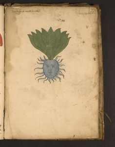 15th century illustrated herbal from Northern Italy. Schoenberg Institute for Manuscript Studies at the University of Pennsylvania Libraries