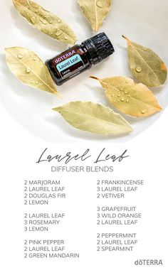 Our new Laurel Leaf essential oil is very uplifting! Try it with these diffuser blends! Copaiba Essential Oil, Essential Oil Diffuser Blends, Essential Oil Uses, Doterra Diffuser, Doterra Oils, Easential Oils, Doterra Blends, Aroma Diffuser, Ravintsara