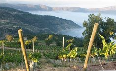 Casablanca Valley, Chile To learn more about #Valparaiso | #CasablancaValley click here: http://www.greatwinecapitals.com/capitals/valparaiso-casablanca-valley