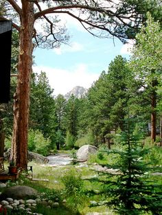Fall River, back yard Estes Park Colorado.--We were in a campground here.  I remember it was really cold, but when we woke up in the morning, my mom said it was the most beautiful place she's ever seen.