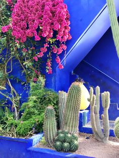 Morocco Travel Photo Diary: Majorelle Garden Visit Marrakech, Marrakech Travel, Marrakech Morocco, Morocco Travel, Marrakesh, Marrakech Hotels, Travel Pictures, Travel Photos, Gardens