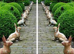 bunnies on walkway