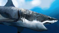 shark - Google Search
