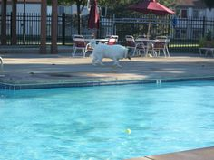 Doggie Dip Day at Fox & Hounds Apartments in Columbus, Ohio!