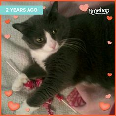 Shadow and her tootsie roll pops!! ♡☆☆☆♡
