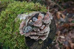 PNW Mushrooms