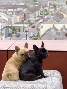 """French Bulldogs  __ I can give you """"CASHBack"""" from your Purchases (Walmart, Groupon, Apple, Tesco, Boots, Asda Gifts, Argos, Best Buy, Macy's, etc.. See my Profile <@jurale13> for Details)."""