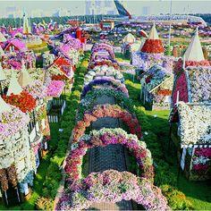 Dubai-Miracle-Garden -floral tunnels - Floral art - art with flowers - flower garden - flower images - white flowers - best flowers flowers pictures Dubai Tourist Spots, Botanical Gardens Near Me, Dubai Vacation, Dubai Trip, Dubai Travel, Million Flowers, Dubai Garden, Flower Bed Designs, Miracle Garden