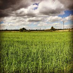 #pola#chmury#słońce#spacerzpsem