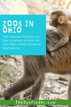 If you want to find Cleveland Ohio attractions, activities and ideas, there are some excellent zoos to offer you could visit! Check out one of these Ohio zoos for your next summer family vacation! Us Travel Destinations, Family Vacation Destinations, Family Vacations, Family Travel, Places To Travel, Columbus Zoo, City Of Columbus, Cincinnati Zoo, Cleveland Ohio
