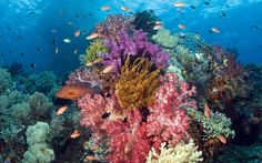 Coral Reef Pictures To Color | ... animals fishes tropical underwater coral reef ocean sea sunlight color