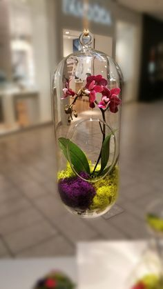 Orchid Plant Terrarium Glass Globe 12 Inch Gorgeous and beautiful! Perfect for homes and offices. A must-have piece♡♡♡ This live orchid terrarium arrangement comes in a unique glass that can be hung or placed as an eye-catching center piece. It arrives pre-arranged with your choice of white, purple or pink orchid (based on availability) with reindeer moss (depending on availability). Customize the moss from an assortment of colors to add a personal touch. Not only are they a great oxygen…