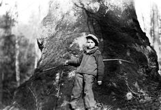 A Webster County sycamore tree, thirty-nine feet in circumference with a young boy standing in front of it.Taken January 1925. West Virginia State Archives