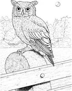 New animal Coloring Book Here amazing pictures http://www.amazon.com/Wild-Creations/dp/1519261489/