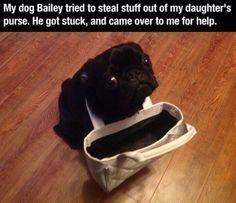 #cute #funny #dog