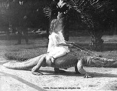 alligator ride ~ 1920 ∞