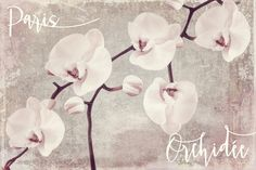 Orchid Painting - Pink Orchids by Mindy Sommers