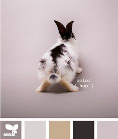 Creatures : color hop