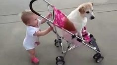 FUNNY DOGS & BABIES COLLECTION - YouTube