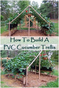 How To Build A PVC Cucumber Trellis - The PVC Cucumber Trellis is a cool way to grow your cucumbers. PVC is quite cheap and very sturdy. This project is not only for cucumbers, but for any vines or vegetables that can climb!