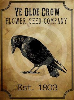 Crows Ravens: Primitive Old Seed Company Printable, by Honey Bee Printables. Primitive Labels, Primitive Crafts, Country Primitive, 4 And 20 Blackbirds, Schrift Design, Quoth The Raven, Crow Art, Crows Ravens, Rabe