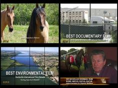 "The ""Moment of Truth"" a clip inspired by viewers of ""SAVING AMERICA'S HORSES"""