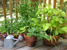 Container Gardening-15 best vegetables that grow well in a container or pot   The Self-Sufficient Living