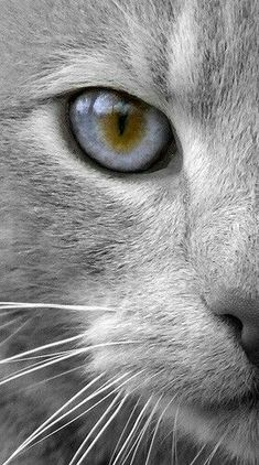 chat noir et blanc - Your Life is Your Pretty Cats, Beautiful Cats, Animals Beautiful, Cute Animals, Animals Images, Baby Animals, Funny Animals, I Love Cats, Cute Cats