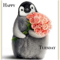 Avanti Press Greeting Cards & Invitations Home & Garden Tuesday Quotes Funny, Tuesday Meme, Hello Tuesday, Thursday, Birthday Greeting Cards, Birthday Greetings, Pinguin Tattoo, Funny Valentine, Valentines