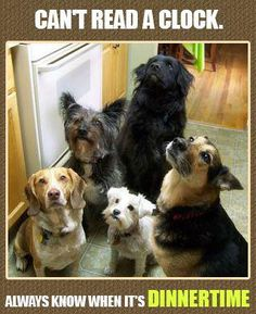 what the hold up..we r hungry..can we eat your food..give dogs human grade food not commercial dog food..if U would not eat it neither should they