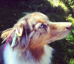 Lucy <3 her Pet Plumes! #FFHPINKLOVE