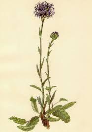 egon schiele flowers - Google Search