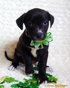 Xg Litter-Cubbie is an adoptable Labrador Retriever Dog in Livonia, MI You can fill out an adoption application online on our official website.If interested in an ... ...Read more about me on @petfinder.com