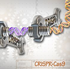 Researchers Design a Precise Library for CRISPR-Mediated Genetic Screens