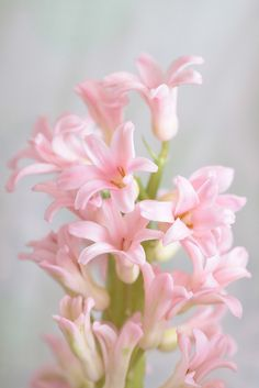 Pretty Little Pink Flowers