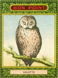 owl cigarette card