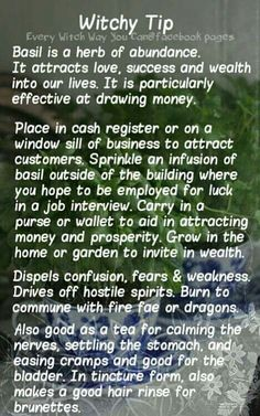 Witchy Tips - Basil - Pinned by The Mystic's Emporium on Etsy Wiccan Spells, Magick, Healing Spells, Magic Spells, Wiccan Beliefs, Moon Spells, Witchcraft Books, Green Witchcraft, Candle Spells