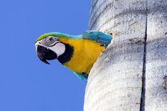 """"""" A curious look """" (Fairchild Tropical Gardens )"""